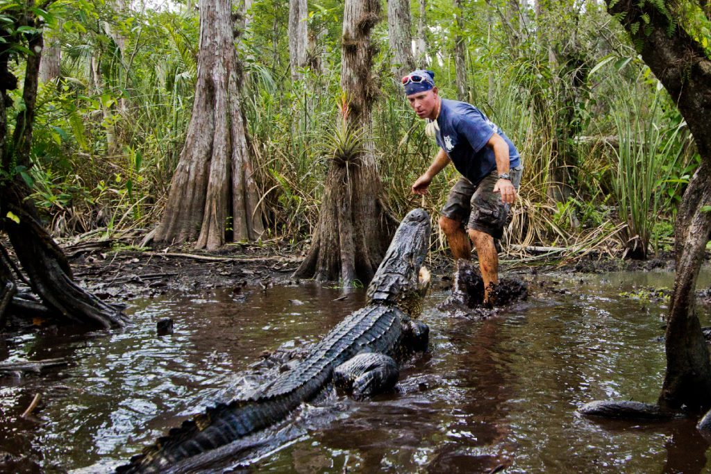 See Alligators Up Close with Everglades Airboat Tours